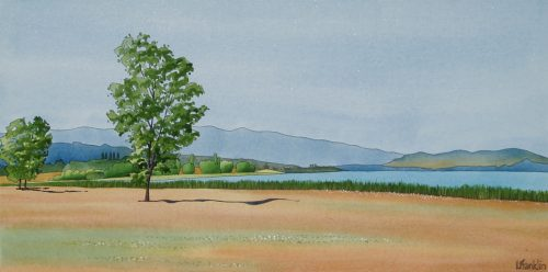 Swan Lake Summer
